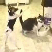 doc_cat.jpg